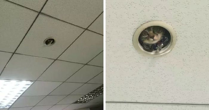 Hilarious Moment Office Workers Realize They Re Being Spied
