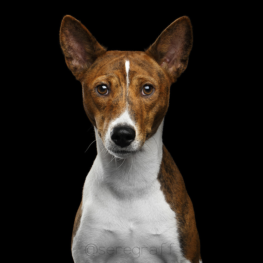 photographer-captures-humanity-portraits-of-dogs (1)