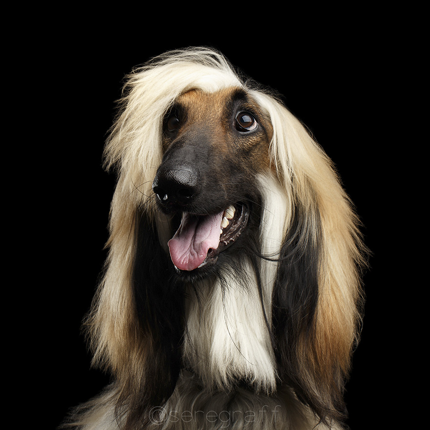 photographer-captures-humanity-portraits-of-dogs (13)