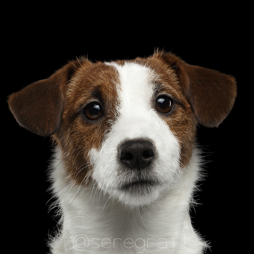 photographer-captures-humanity-portraits-of-dogs (14)