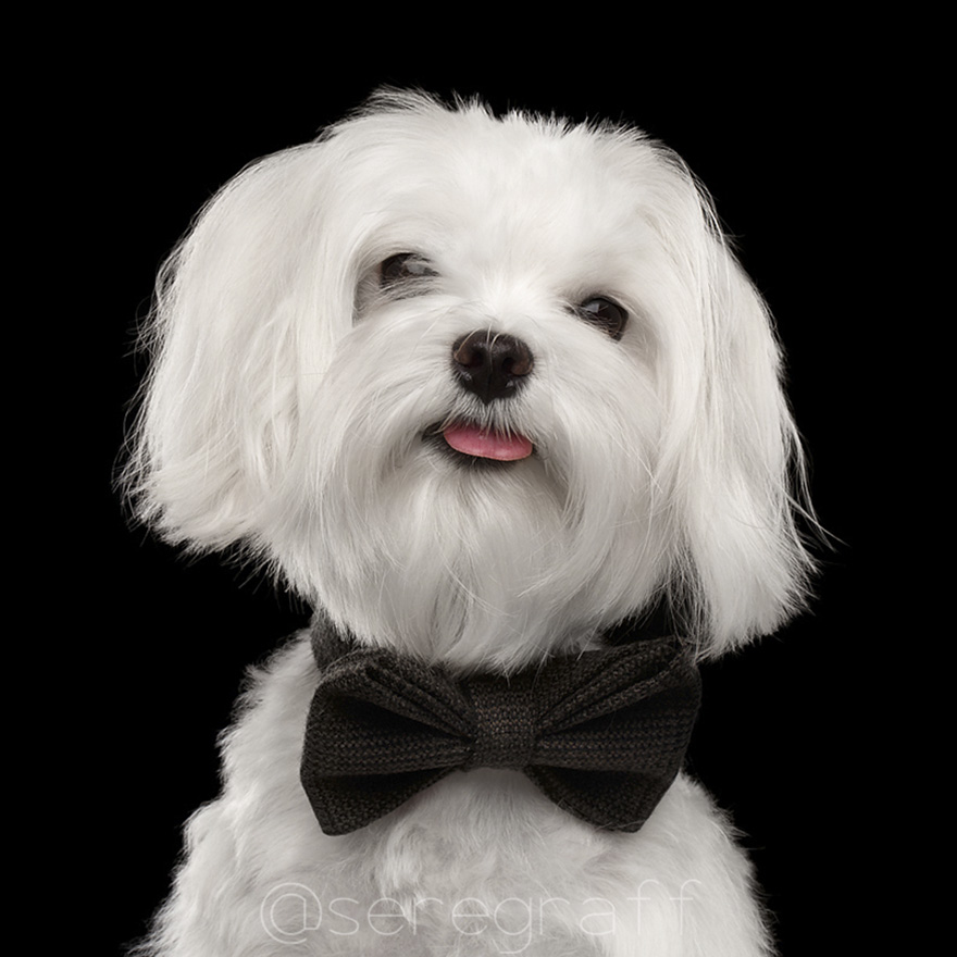 photographer-captures-humanity-portraits-of-dogs (3)