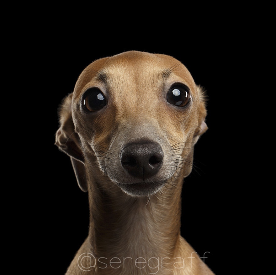 photographer-captures-humanity-portraits-of-dogs (4)