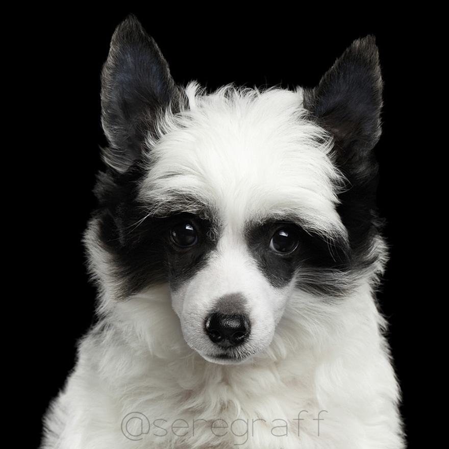 photographer-captures-humanity-portraits-of-dogs (6)