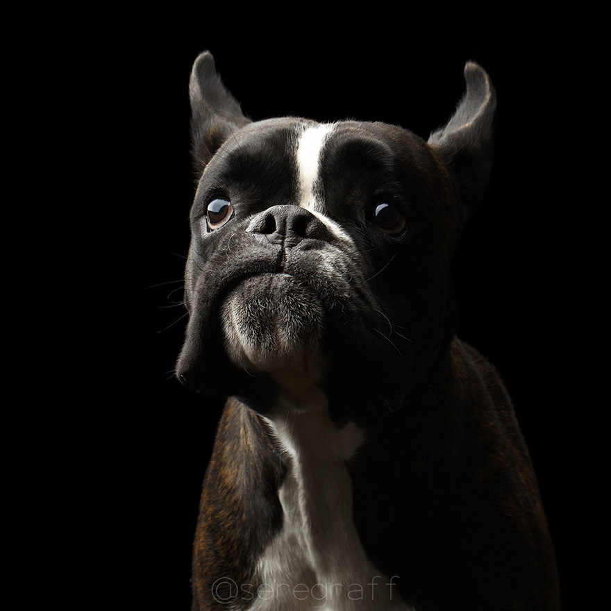 photographer-captures-humanity-portraits-of-dogs (7)