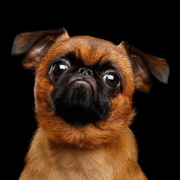 I Photograph Human-Like Portraits Of Dogs