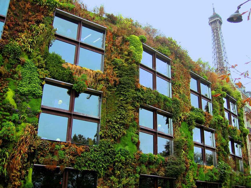 plant-urban-gardens-anyone-law-paris-14