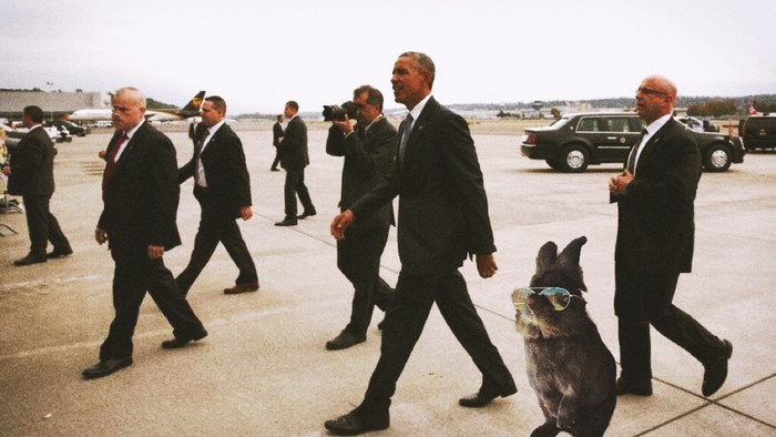 Secret Service Bunny