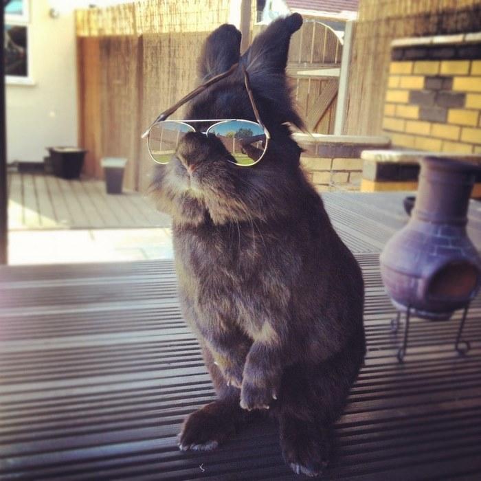 Proper Rabbit Glasses