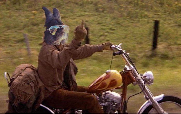somebody put sunglasses on a bunny and it started an epic photoshop battle  10  pics
