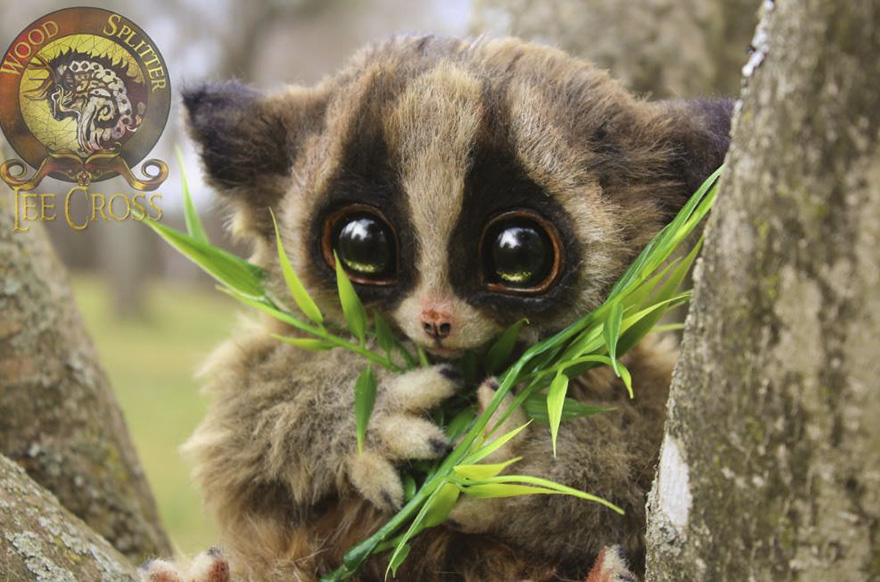 """Lolly,"" The Baby Loris"