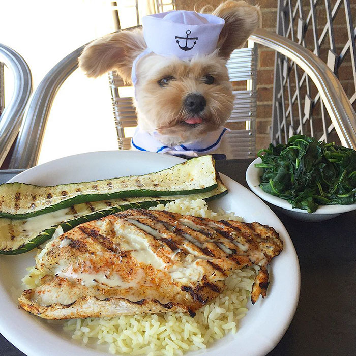 Popeye The Foodie Dog