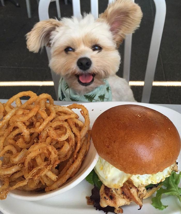 Popeye The Foodie Dog