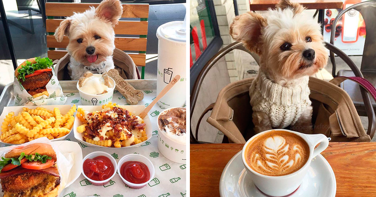 Starving Homeless Dog Gets Rescued And Taken To Pet-Friendly Restaurants Every Day