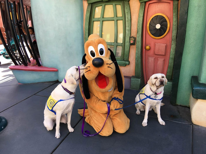 service-dog-caricature-disneyland-9