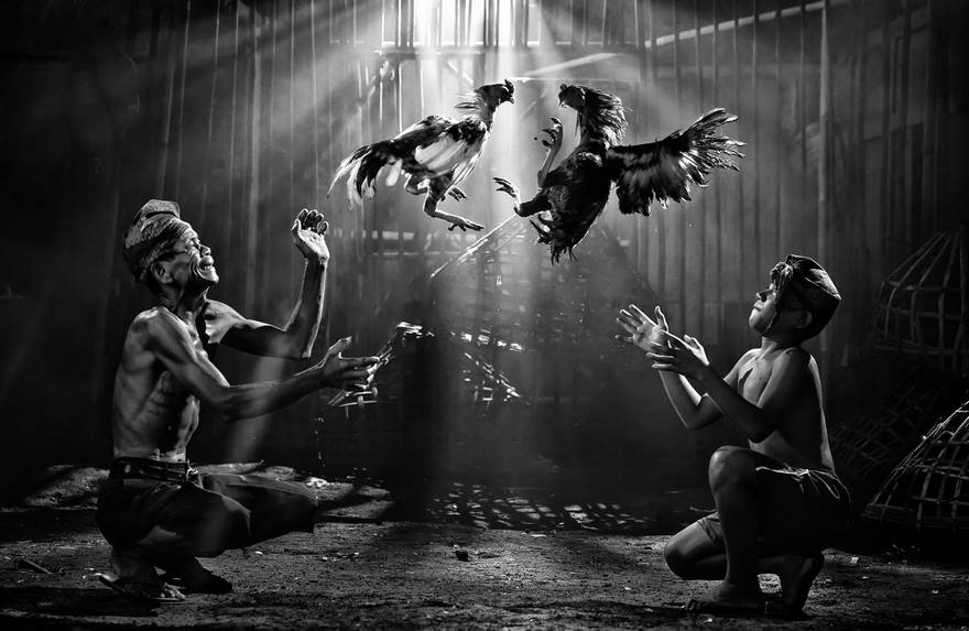 Cock Fighting, Indonesia (2nd Place In Open Monochrome Category)
