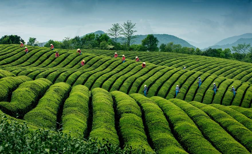 Ripples In Tea, China (Honorable Mention In Travel Category)