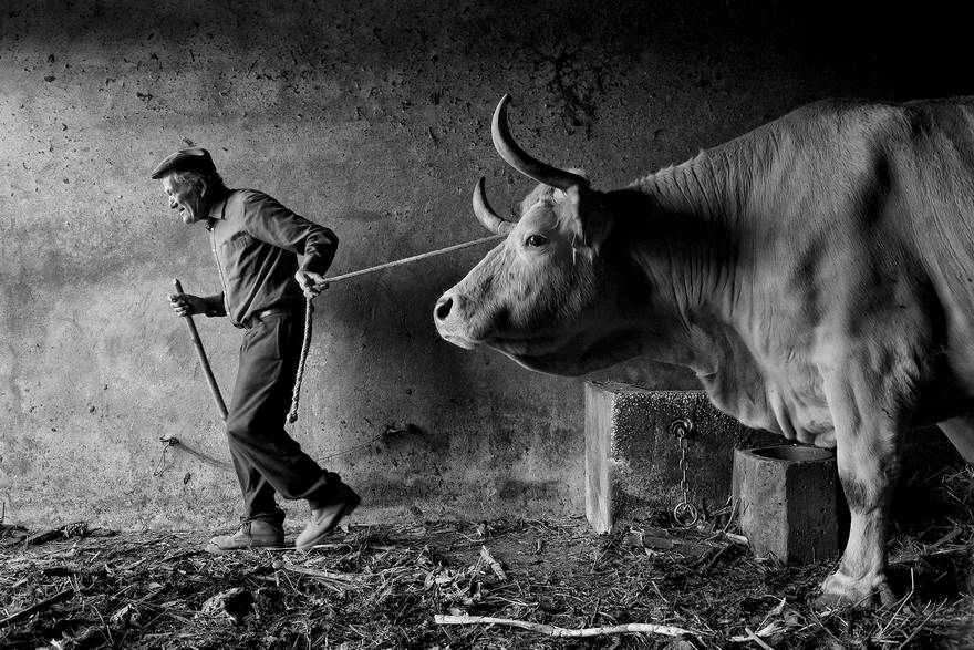Rural Portuguese People - Beginning Of The Day (Remarkable Award, People And Portrait Category)