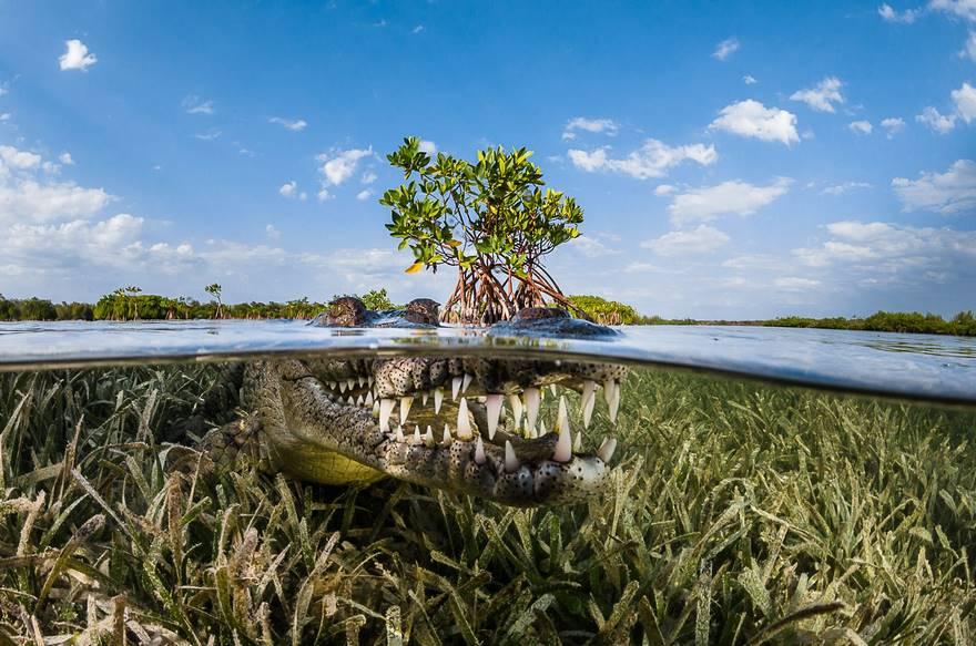 Manglar, Cuba (mención de honor en la naturaleza Categoría)
