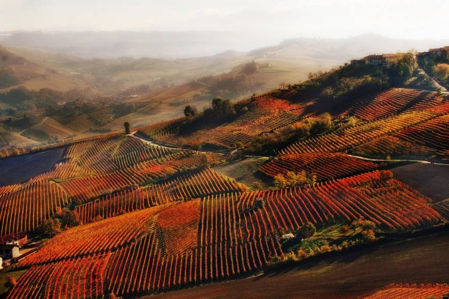 Red Mist En Alba (Segundo lugar en la categoría de vinos)