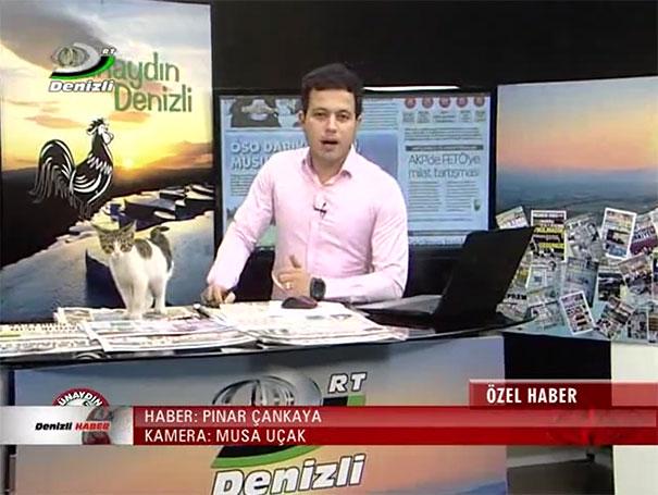 stray-cat-live-tv-news-turkey-4