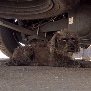 Rescuers Found A Stray Dog But It Refused To Leave, Soon They Found Out Why...