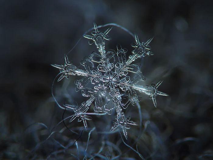 Close-ups Of Snowflakes