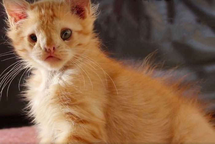 Image result for romeo the ugly kitten