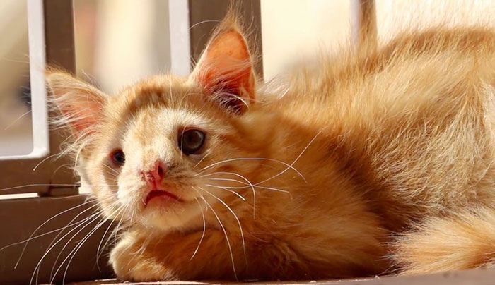 ugly-kitten-romeo-5