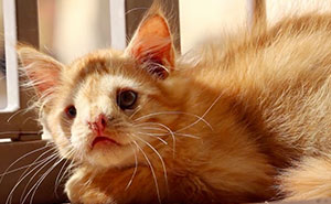 Cat Abandoned For Being 'Too Ugly', Finally Finds Someone Who Saw His Beauty