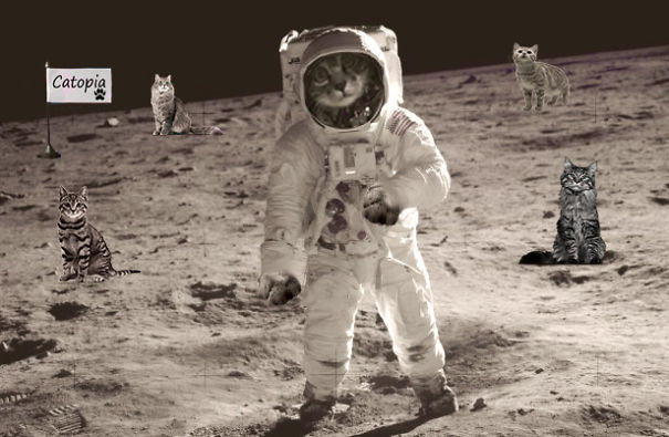 Cats Take Over The Moon