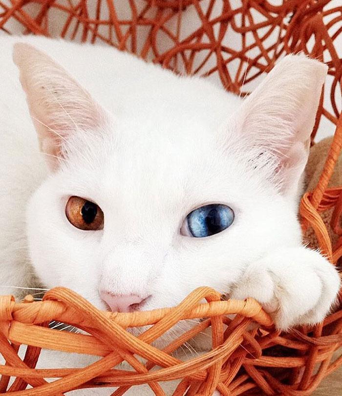 Xiaomao Has Gorgeous Eyes