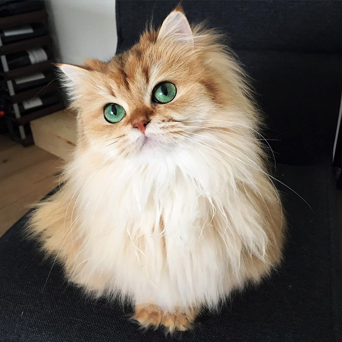 Meet Smoothie, World's Most Photogenic Cat