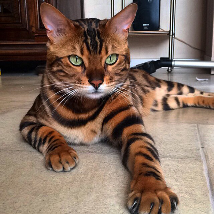 29 Of The Most Beautiful Cats In The World | Bored Panda