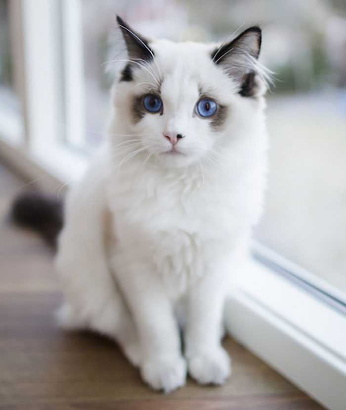 Those Ocean Blue Eyes