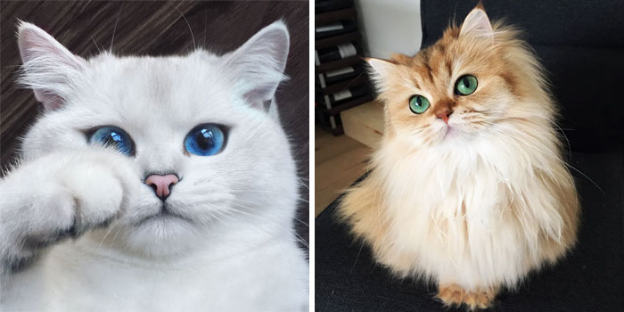29 Of The Most Beautiful Cats In The World