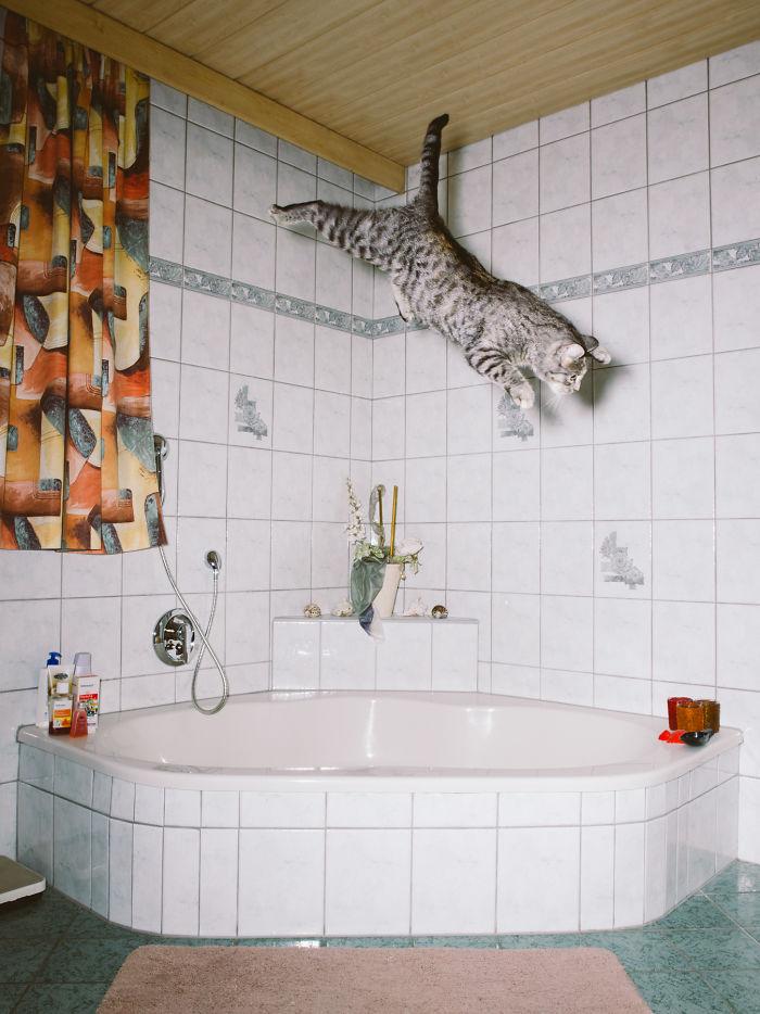 Jumping Cats By Daniel Gebhart De Koekkoek