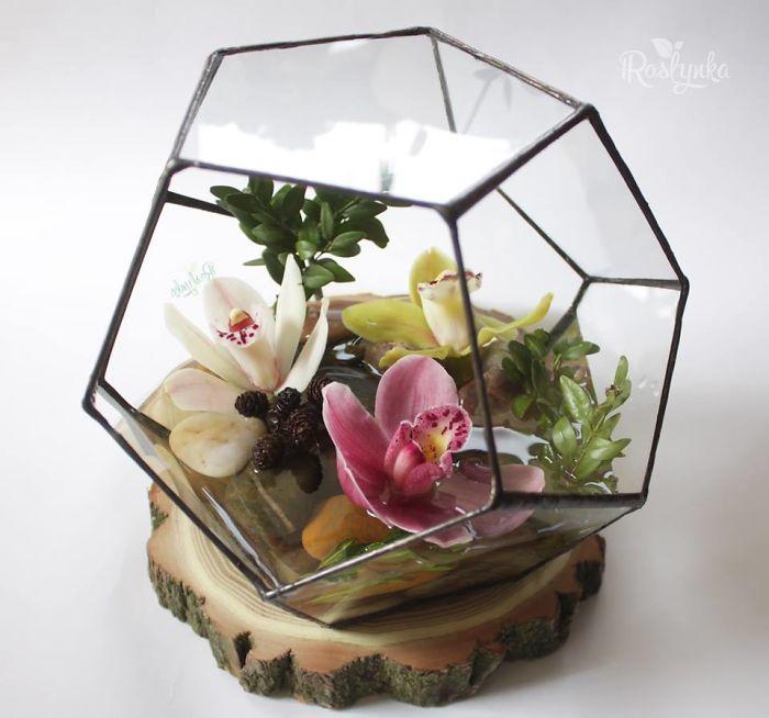 Small Succulent Beauties From Ukraine
