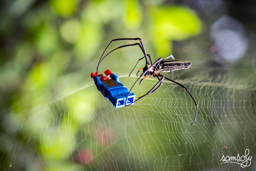 Spider (okinawa)