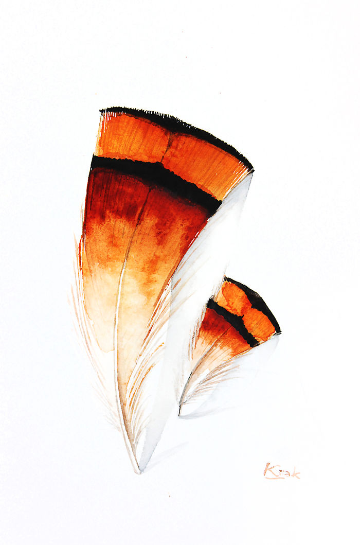 Golden Pheasant Feathers
