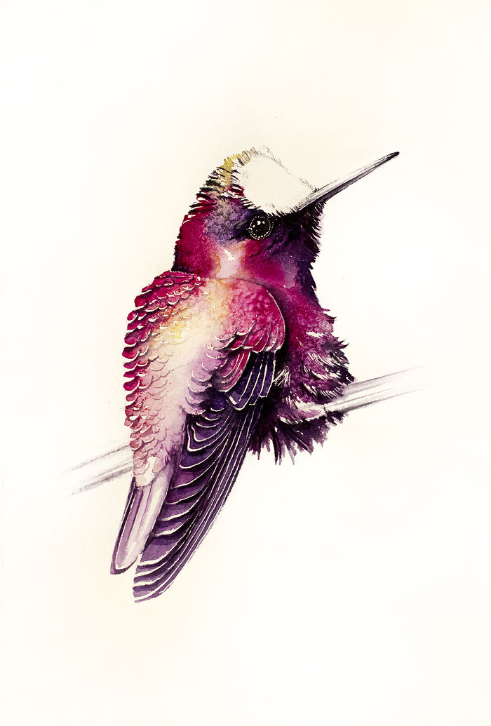 Hummingbird In Pink