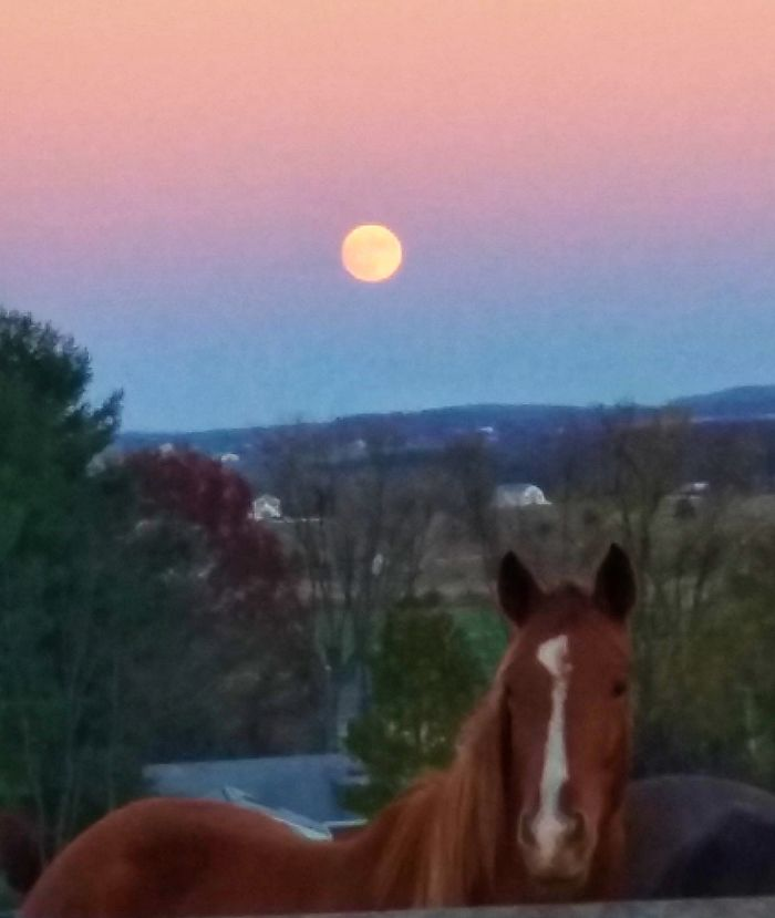 Supermoon And A Thoroughbred