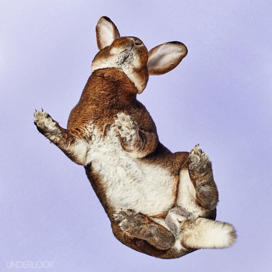 Under-rabbits