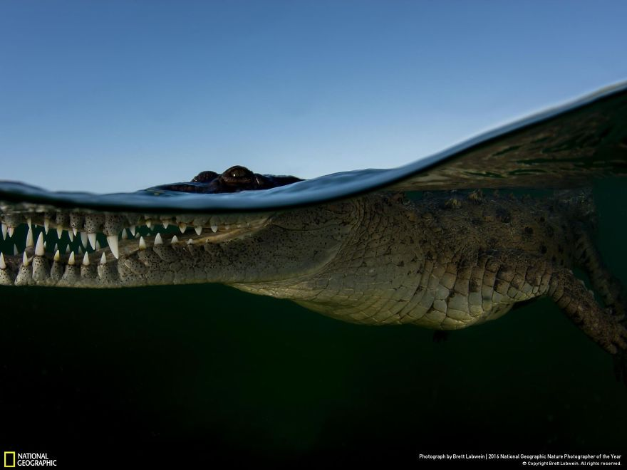Crocodile Waterline