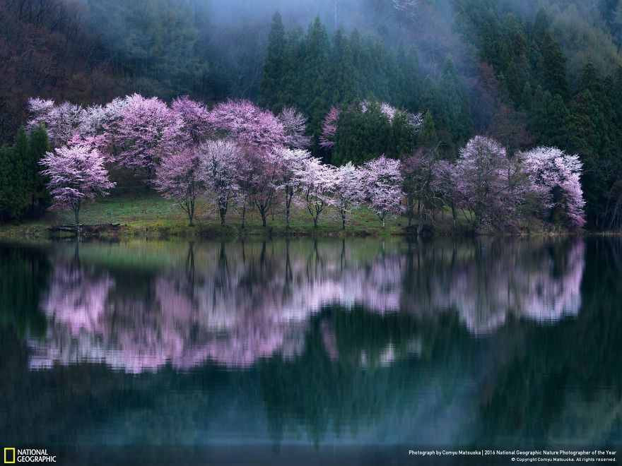 Phantom Spring