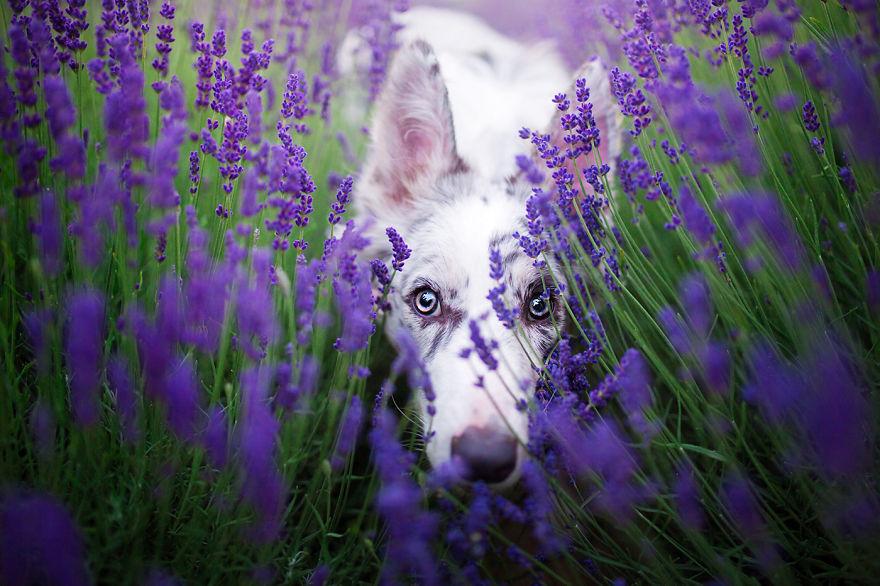 Ciri Playing Hide And Seek!