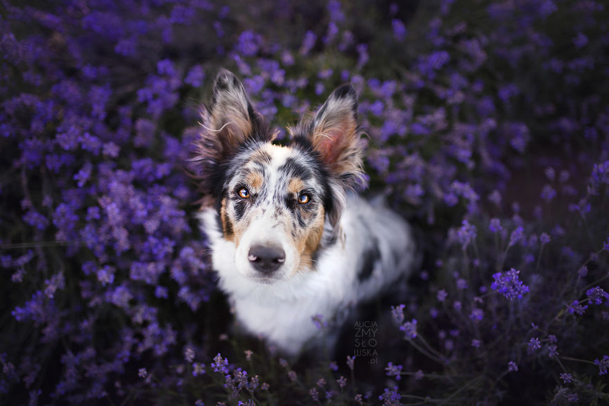 Nala Shining In Lavender