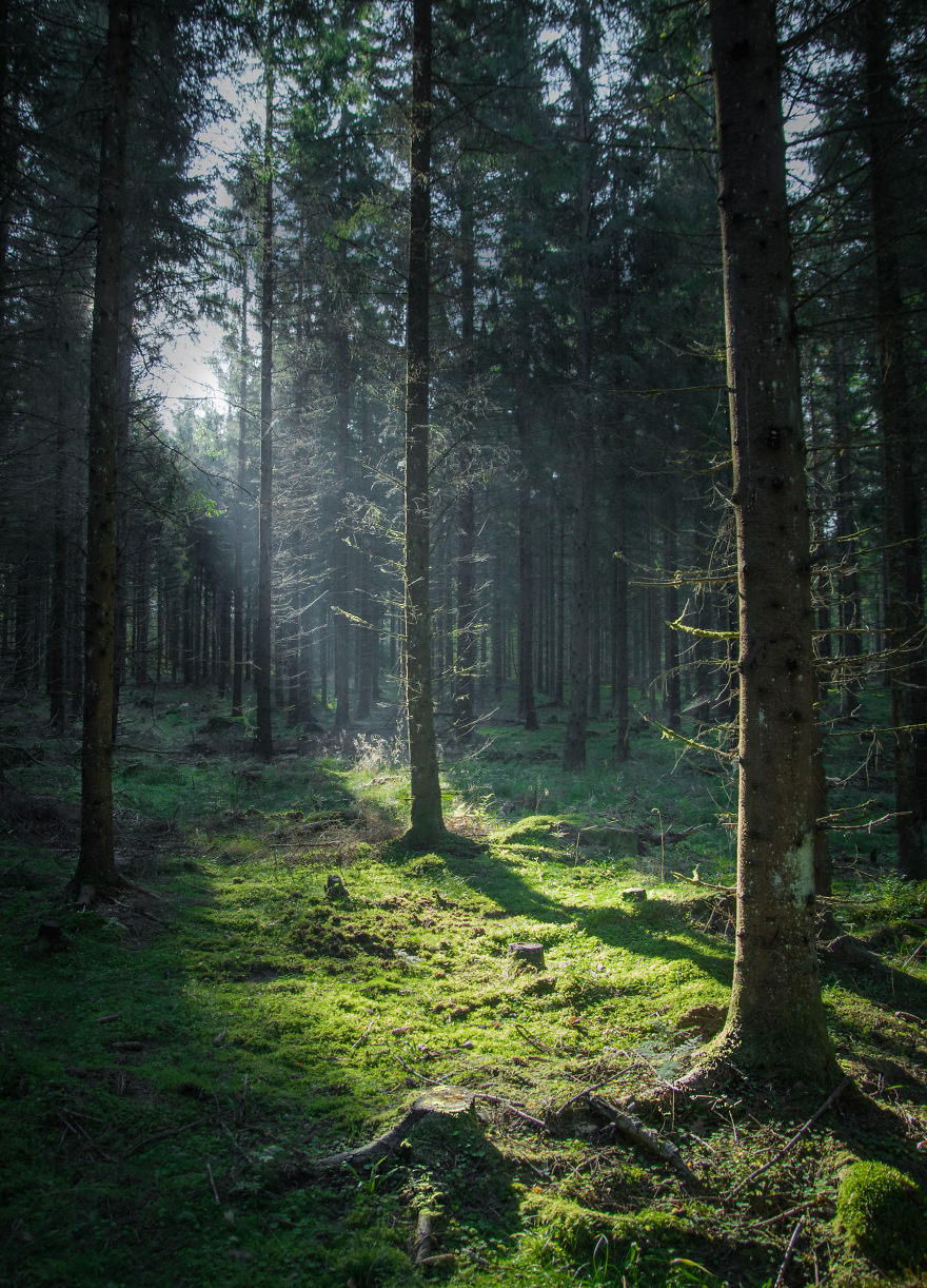 I Started Photographing Swedish Nature As A Therapy After