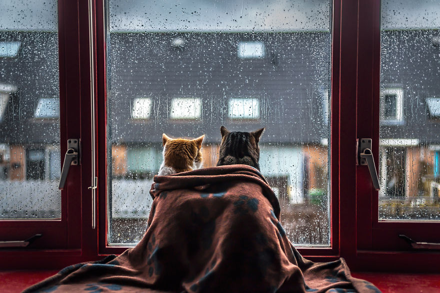 i photograph my cats in front of the window whenever it s raining