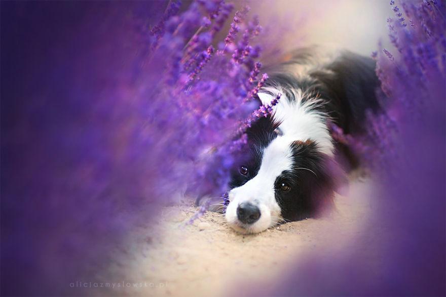 Dreaming Baszka