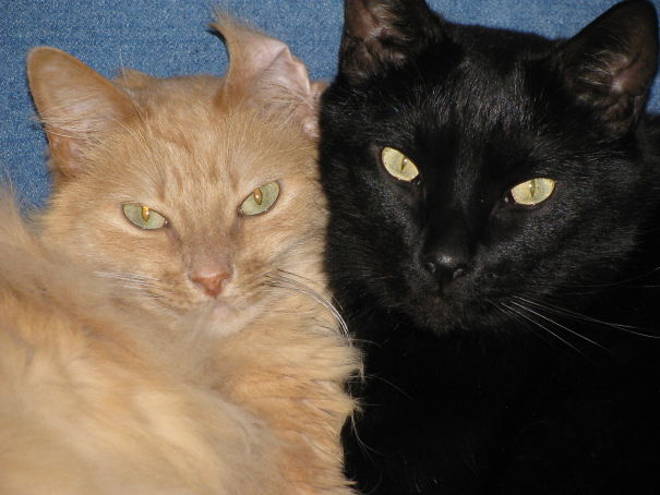 How About Black & Orange? My Tabitha & Ebony; No Longer By My Side, But Forever In My Heart.
